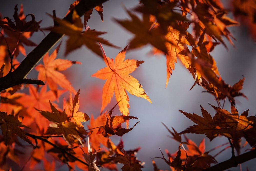 Fall Leaf and Yard Cleanup